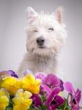 在蝴蝶花之中的狗 免版税库存图片