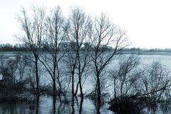 在河岸的树 免版税库存图片