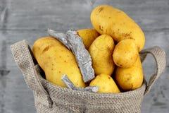 在黄麻袋子的土豆 免版税库存图片