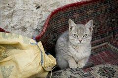 在麻袋布的家猫 免版税图库摄影