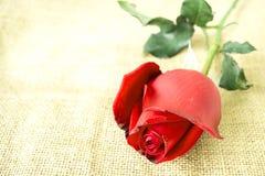 在麻袋布的红色玫瑰 免版税库存照片