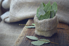 在麻袋布的芳香干月桂叶和在木板的月桂叶 干草本 免版税库存图片