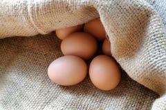 在麻袋布的鸡/鸡蛋 库存图片