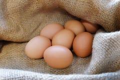 在麻袋布的鸡/鸡蛋 库存照片