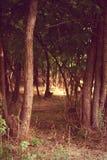 在-被影响的木头的早晨 免版税库存图片