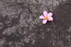 在破裂的土地的花 库存图片