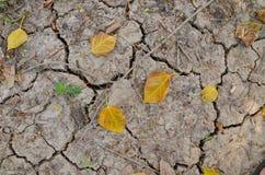 在崩裂的地面的树 图库摄影