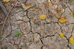 在崩裂的地面的树 免版税图库摄影