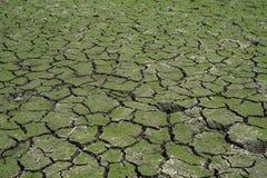 在破裂的泥的绿草在显示drou的河底部 免版税库存照片