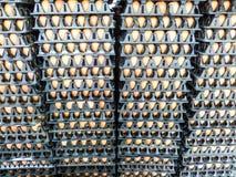 在组装的鸡蛋 库存图片