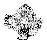 在黑解释的豹子 图库摄影