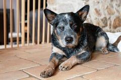 在画象的一条逗人喜爱的狗 免版税库存照片