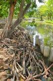在水边缘的干燥分支 图库摄影