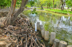 在水边缘的干燥分支 免版税库存照片