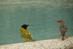 在水边缘的鸟 库存图片
