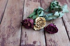 在年迈的木背景的干燥玫瑰 免版税图库摄影