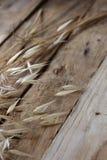 在年迈的木背景的干野燕麦 库存图片