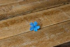 在年迈的木背景的精美蓝色花 图库摄影