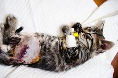 在麻醉作用睡觉下的小猫 免版税库存照片