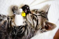 在麻醉作用睡觉下的小猫 库存图片