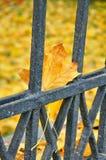 在黑金属篱芭的一片黄色下落的叶子 库存图片
