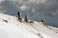在黑门山倾斜的积雪的树。 免版税库存照片