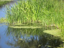在水附近的草绿色 免版税库存图片