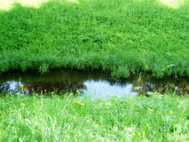 在水附近的绿草在公园圣彼德堡 免版税库存图片