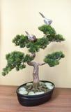 在黑陶瓷罐的一棵小盆景树在木桌上,在黄色背景 与小燕子的盆景树在分支 库存照片