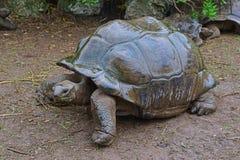 在暴雨期间,最大的草龟在设法的公园发现一片干燥树荫 免版税库存照片