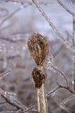 在冻雨风暴在12月,多伦多,安大略,加拿大以后的花 免版税库存照片