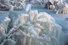 在冻雨以后的给上釉的灌木 库存图片
