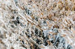 在冻雨以后 免版税库存照片