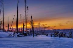 在滑雪足迹的日落 免版税库存图片