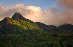 在猴面包树森林Mahe,塞舌尔群岛的日落 库存图片