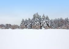 在暴风雪以后的镇静冬天森林 库存图片