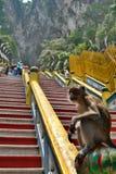在黑风洞印度寺庙的猴子 Gombak,雪兰莪 马来西亚 免版税图库摄影