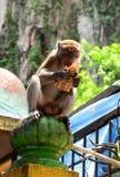 在黑风洞印度寺庙的猴子 Gombak,雪兰莪 马来西亚 免版税库存图片