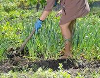 在素食者补丁的妇女锄的杂草 免版税库存图片