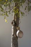 在绿洲Al哈姆拉阿曼的Waterjar 免版税库存图片