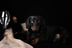 在黑background.illustration的狗 免版税库存图片