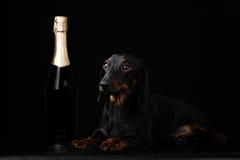 在黑background.illustration的狗 库存照片