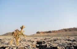 在a的死的树被烘干空的水库或水坝在夏天热浪、低降雨量和天旱期间在北部卡纳塔克邦,印度 免版税库存图片