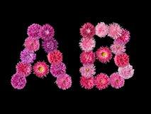 在A,从明亮的翠菊的B上写字 库存照片