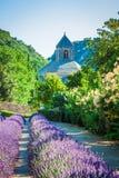 在abbaye de Senanque前面的淡紫色在普罗旺斯 图库摄影