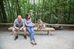 在Affenberg (猴子小山)的坐的猴子在萨利姆,德国 库存图片