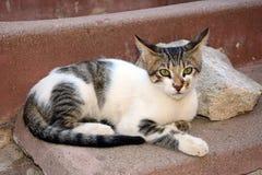 在Agia Triada,克利特的灰色虎斑猫 图库摄影