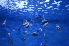 在aguarium的鱼 免版税图库摄影