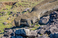 在Ahu Akahanga -复活节岛,智利的下落的Moai雕象 免版税库存图片