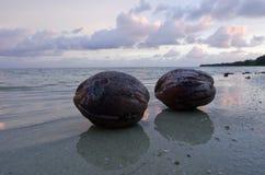 在Aitutaki盐水湖库克群岛的椰子 库存图片